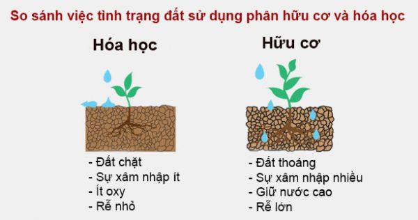 ảnh hưởng phân bón hóa học tới môi trường