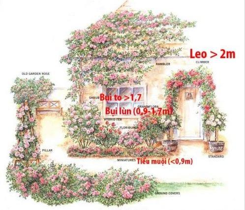 V%E1%BB%8B-tr%C3%AD-tr%E1%BB%93ng-c%C3%A1c-lo%E1%BA%A1i-hoa-h%E1%BB%93ng-498x427-min.jpg