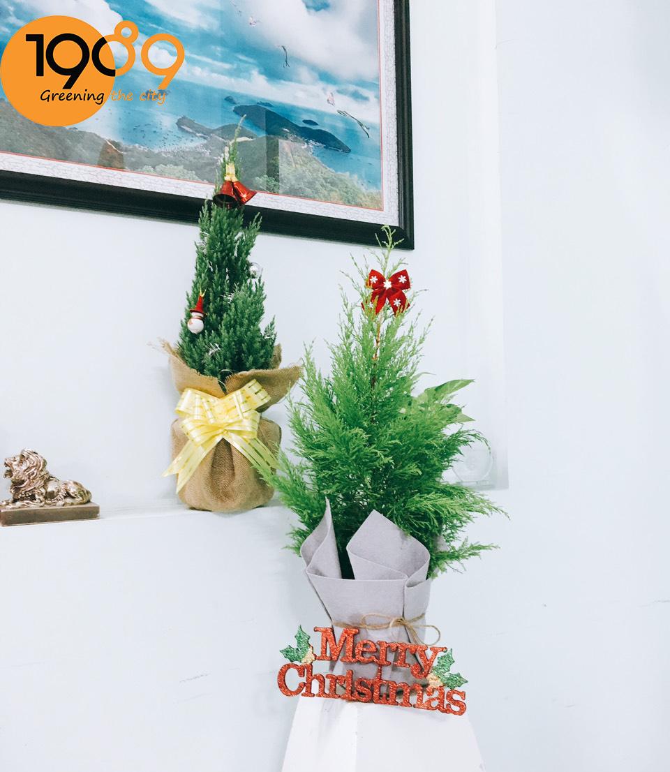 trang trí cây noen mùa giáng sinh
